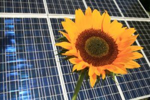 Panel_Sunflower_300